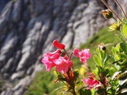 Klettersteig 2012 / Lienzer Dolomiten_312