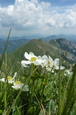 Klettersteig / Rakousko Štýrsko - Hochschwab-Gruppe_64