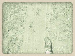 Nordic Walking II. Po valašských kopcoch._760