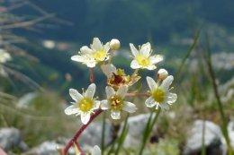 Klettersteig / Rakousko Štýrsko - Hochschwab-Gruppe_78